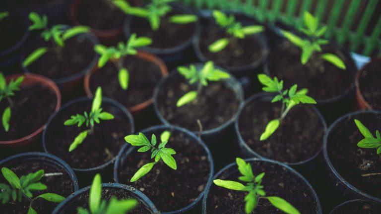 """Os """"Não-Clientes"""" servirão de base para o futuro crescimento!"""